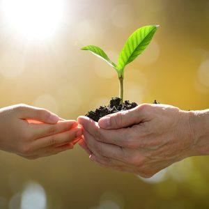 Melestarikan Lingkungan dan keuntungan menjaganya
